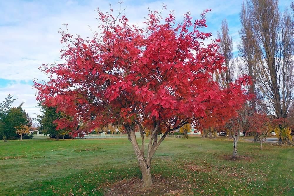 Осень в Новой Зеландии очень цветная. Много желтых и красных деревьев на фоне зеленых лужаек. Температура воздуха — около +15°С