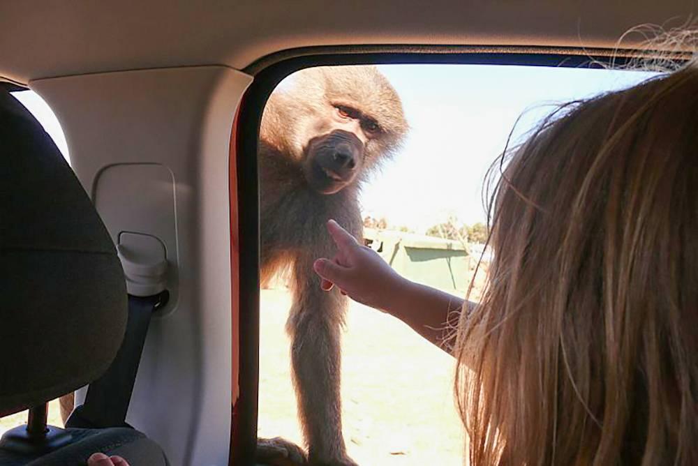 В путешествиях с детьми машина удобна, но мы обычно обходимся автобусами и такси