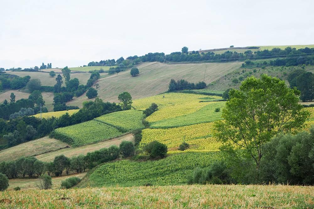 Пейзажи по дороге к каньону напомнили нам Тоскану: холмы, разноцветные поля и много пространства. Разве что вместо виноградников плантации табака
