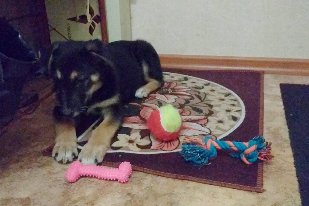 Я постелила Бруно коврик и снабдила игрушками из зоомагазина