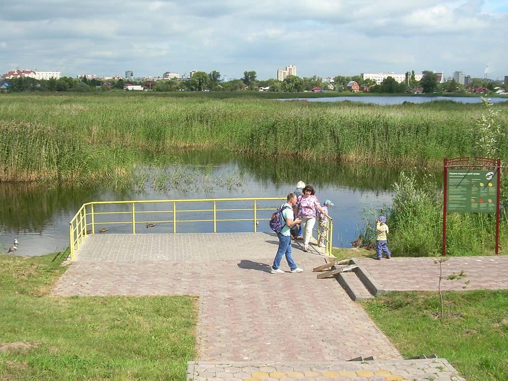 Это озера «Птичьей гавани». Вдали виднеются здания по улице Ленина — самый центр Омска