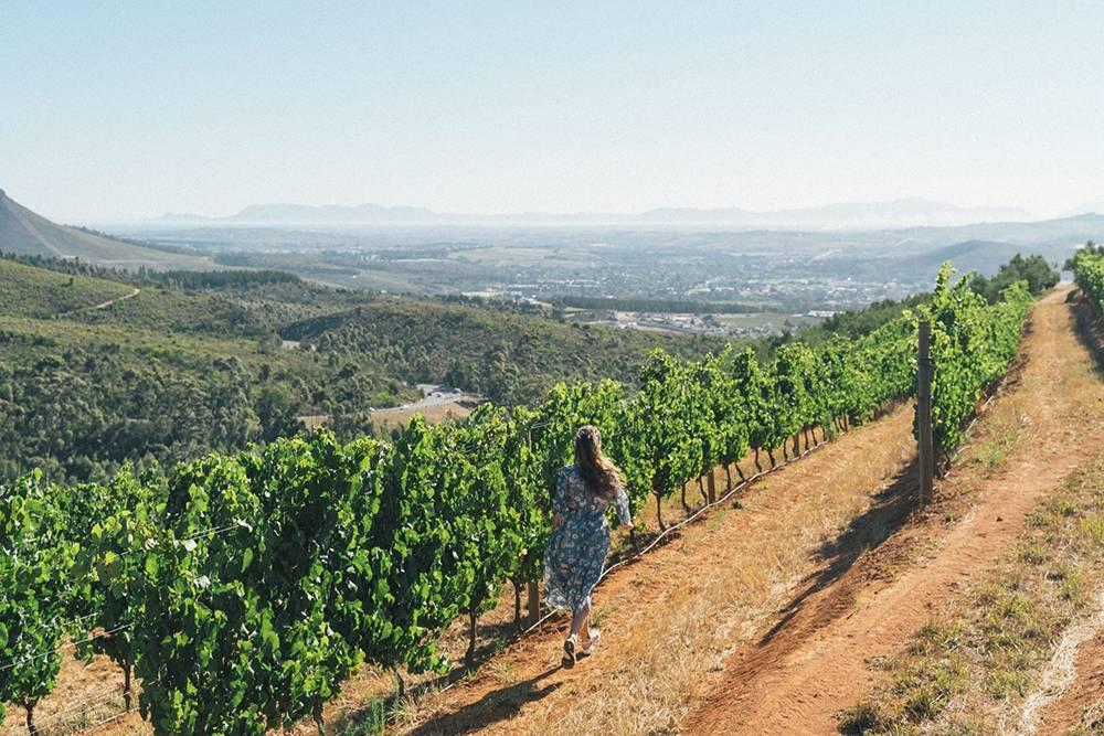 Побегать среди виноградников — еще одна мечта, которая исполнилась в Южной Африке