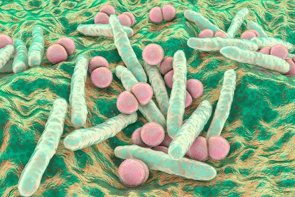 Красивые зеленые палочки — бактерия туберкулеза вбольшом увеличении. Точно такаяже поселилась вмоих легких. Источник: KaterynaKon / Shutterstock