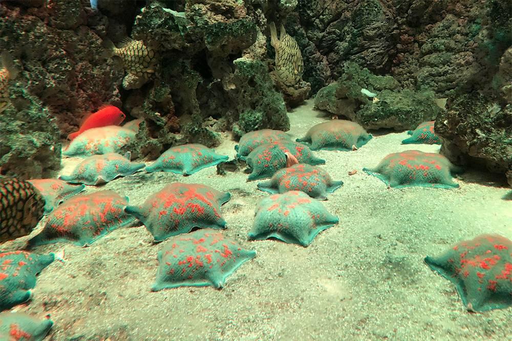 В «Москвариуме» меня больше всего впечатлили морские звезды, похожие на пирожки. Еще мне понравились нерпы и голотурии, но их фото у меня не осталось