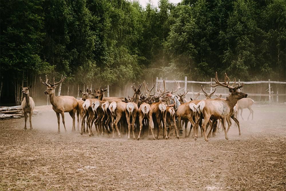 Летом на ферме нет отбоя от посетителей. Источник: Анастасия Губинская