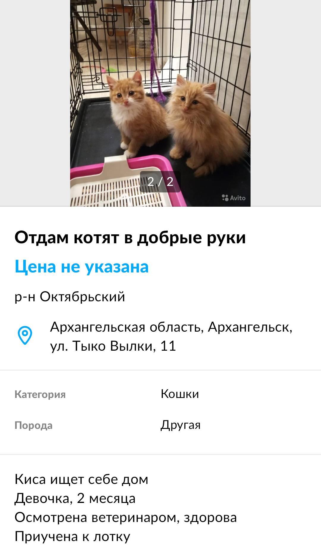 Так выглядят мои посты о поиске новых хозяев для котят