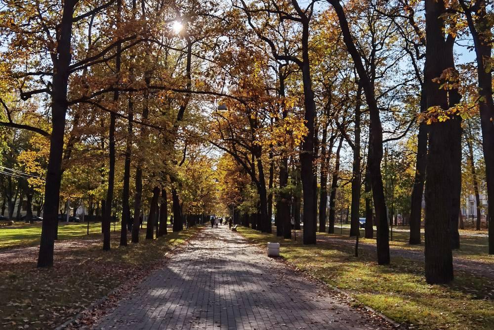 Сквер по дороге к парку «Царское Село»