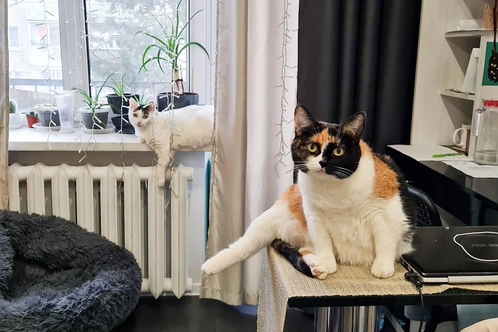 Котики провожают меня на работу — правда, только взглядом. На переднем плане Масяня, на заднем — Тайсон