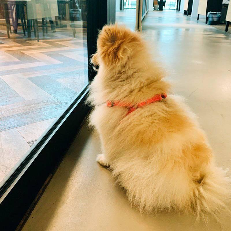 Сегодня офис-менеджер привел свою собаку — шпица. Глажу его (шпица, не менеджера) и иду завтракать йогуртом и свежей клубникой