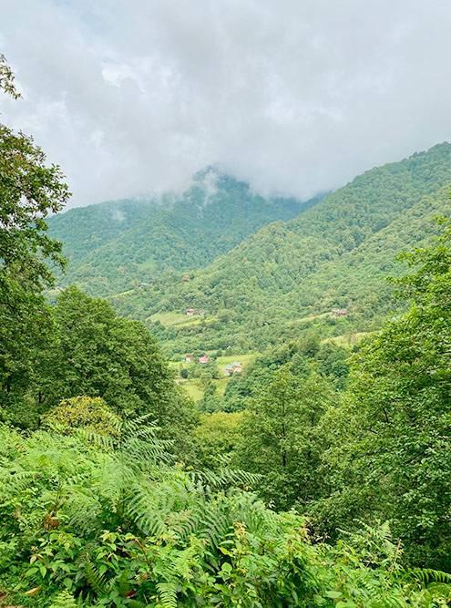 Мтирала — гора рядом с Батуми и одноименный национальный парк