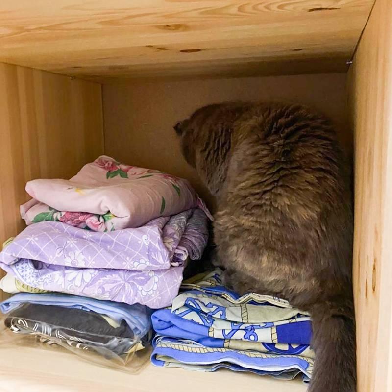 Кошка утром забралась на полку с бельем в гардеробной, а слезть сама уже не смогла — сидела и звала на помощь