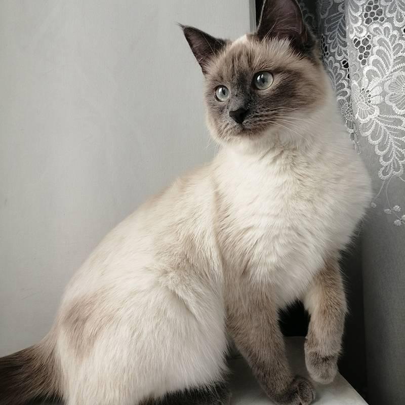 Алиса выросла вот такой красавицей. Трудно поверить, что она была бездомным котенком