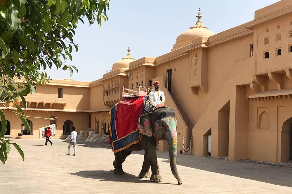 Индия ассоциируется со слонами, но мы встретили их всего два раза: в зоопарке в Нью-Дели и в Агре — тут на них катали туристов