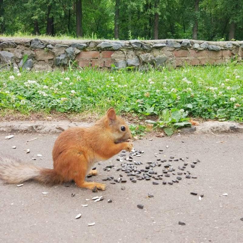 В парке Кирова тоже можно встретить животных