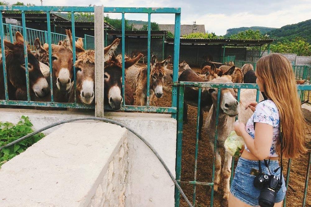 Вход на ослиную ферму бесплатный, а находиться там можно сколько угодно