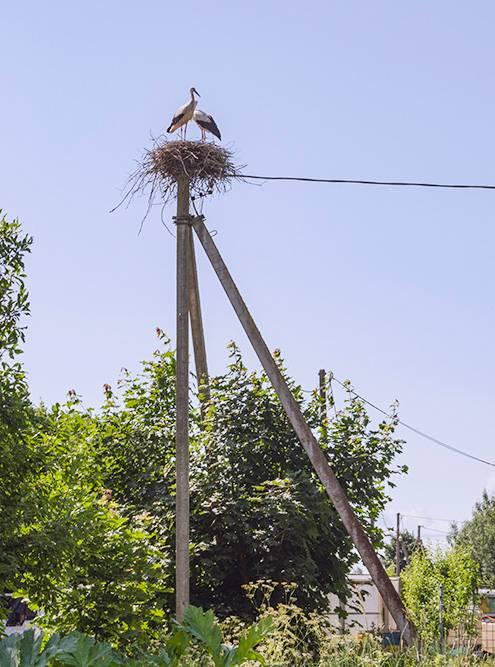 По дороге к склепу можно застать пару аистов в гнезде
