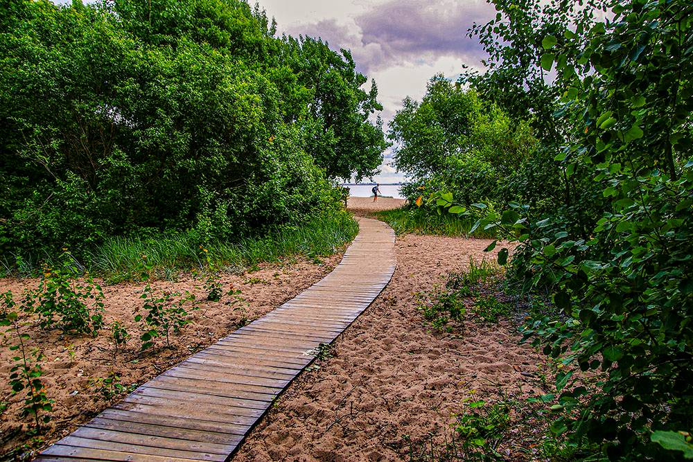 Экотропа ведет к берегу Финского залива