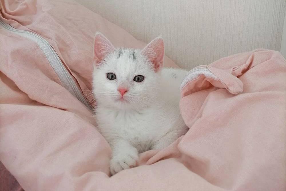 Нашему коту три месяца