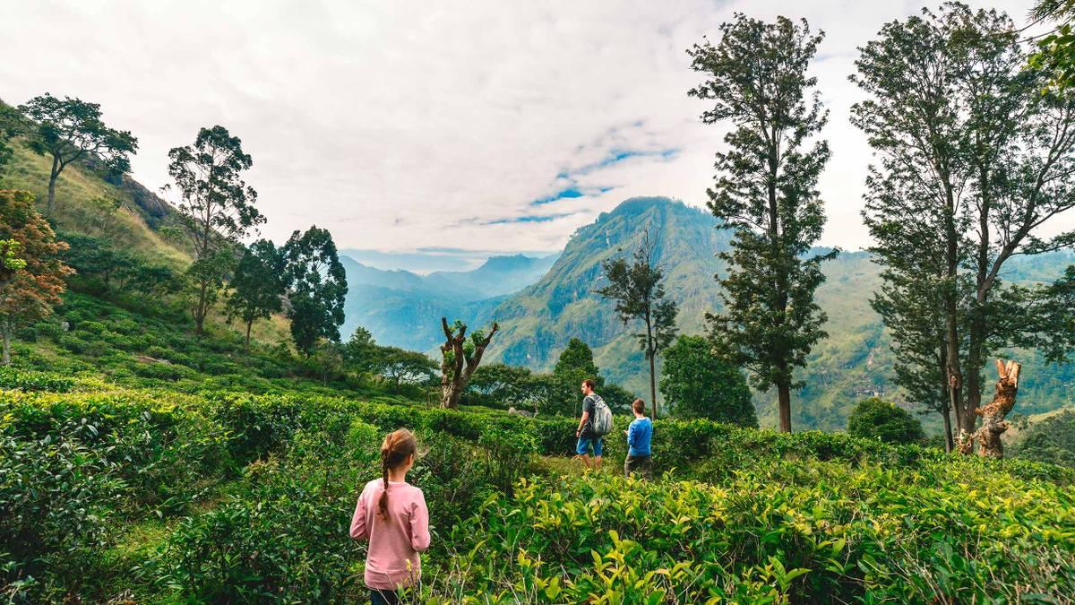 Шри-Ланка открылась длятуристов: правила въезда в 2021году