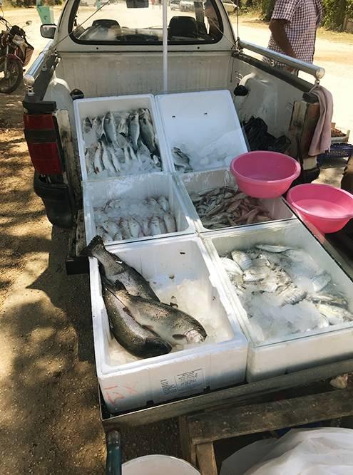 Рыбу и большую часть продуктов я покупаю у местных рыбаков и фермеров