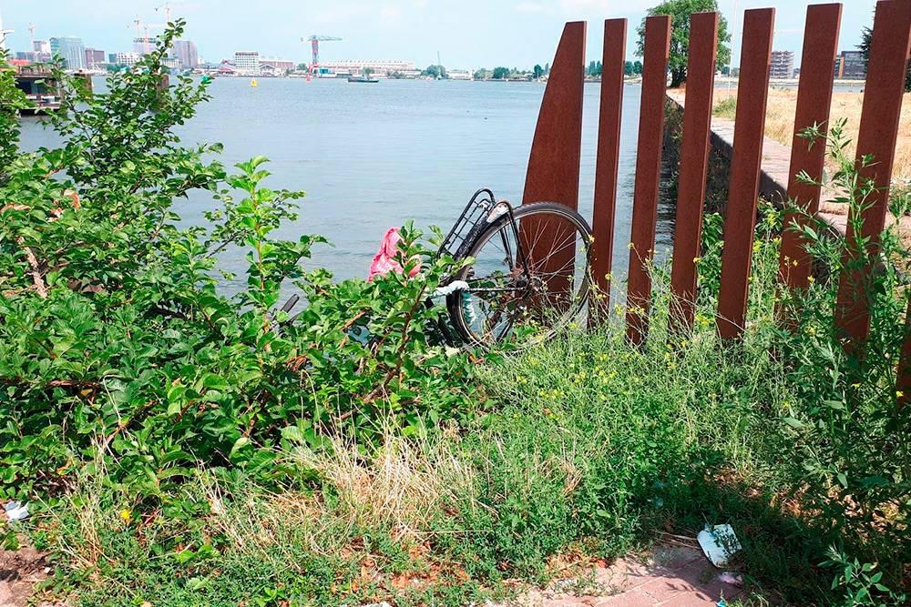 Велосипед, потерявшийся в кустах