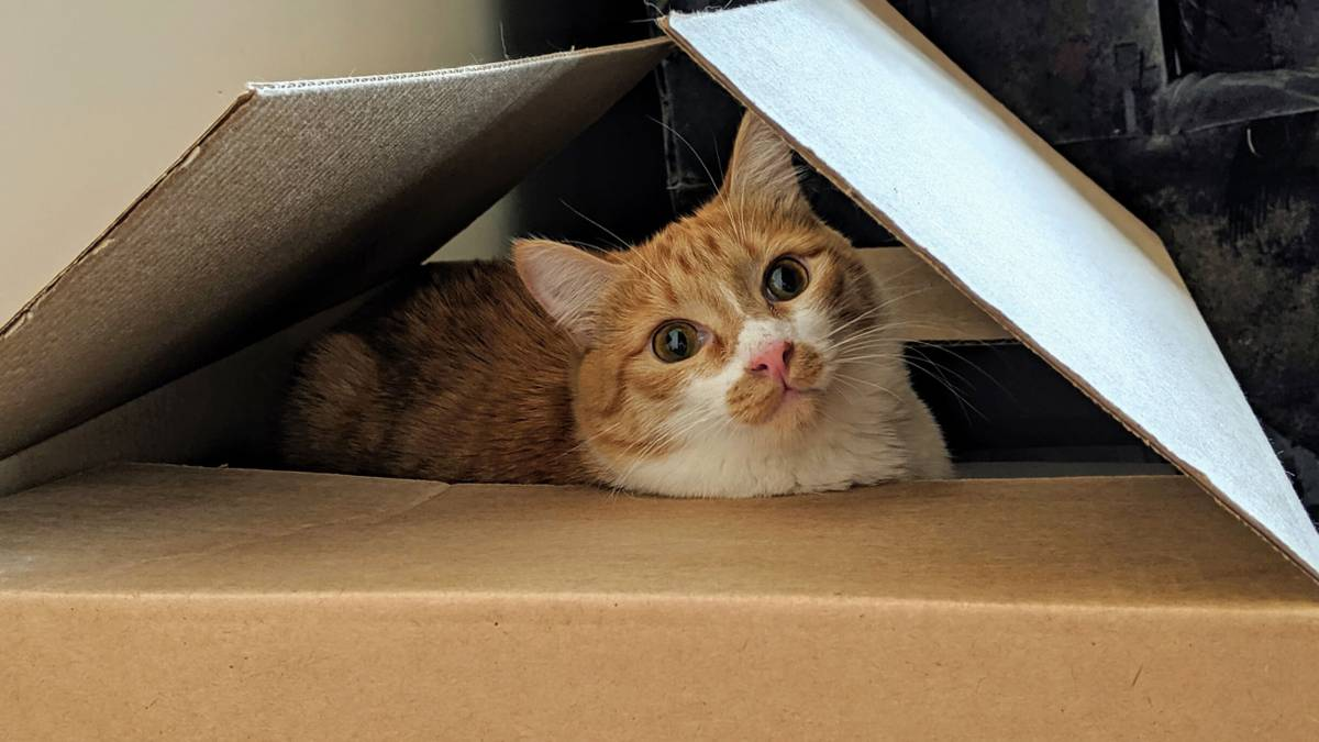Дорогие кисоньки: 19 кошек и котов, которые живут у читателей Т—Ж