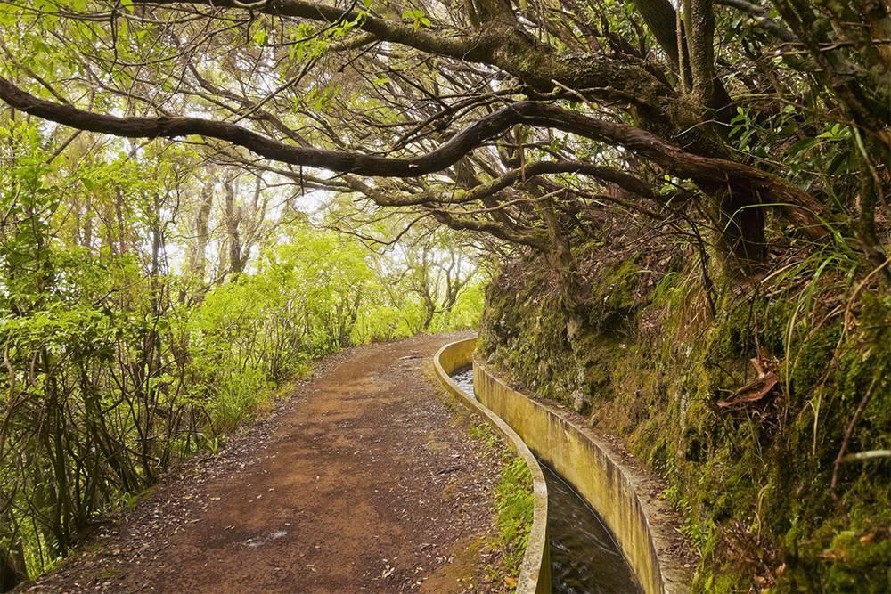 На Мадейре несчетное количество левад. Источник: Karol Kozlowski / Shutterstock.com