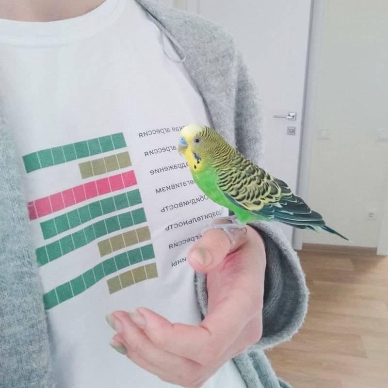 Попугайчик, как всегда, орет