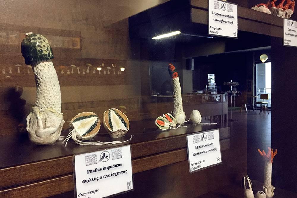 Весёлка обыкновенная, или Сморчок вонючий, или Сморчок подагрический, или Фаллюс нескромный (лат. Phallus impudicus) и макеты других грибов в музее естествознания