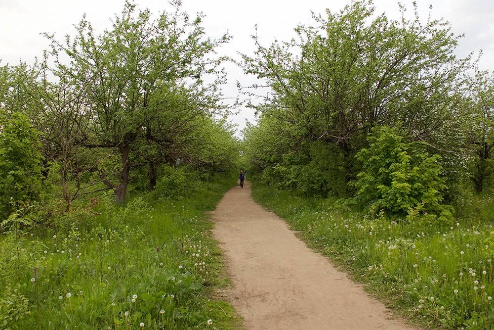 Яблоневый сад рядом с нашим домом. В теплое время года в нем постоянно гуляют и отдыхают люди. Мы любим ходить и в Ботанический сад, там много разных необычных деревьев