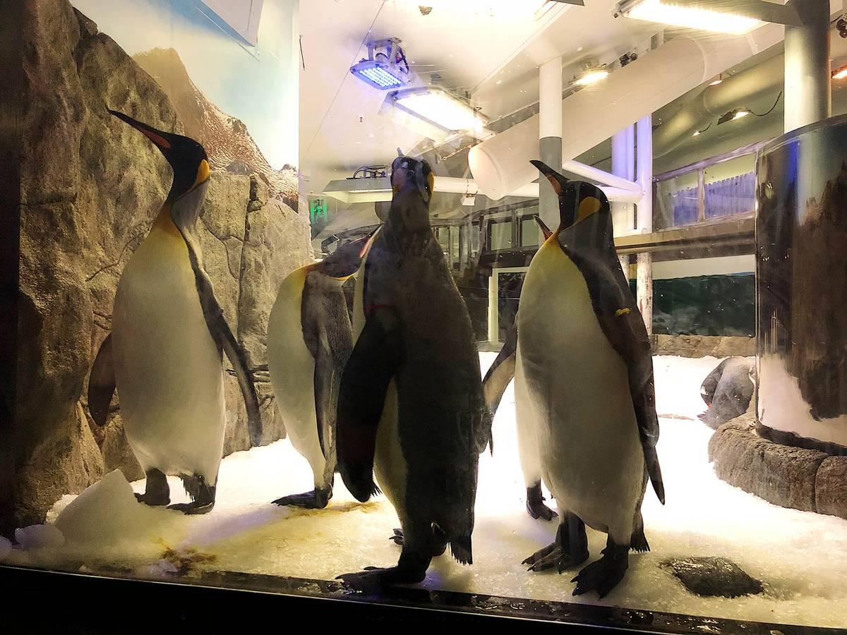 Любопытные пингвины в океанариуме
