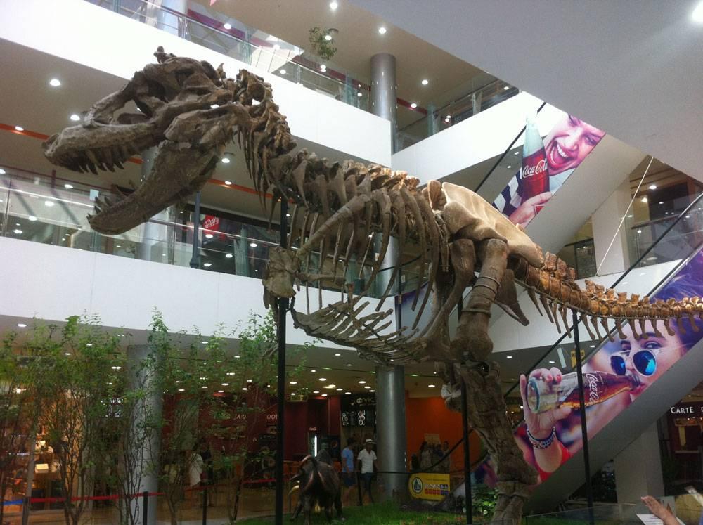 А еще Монголия — родина динозавров. Самые крупные скелеты нашли именно здесь. На фото — скелет тираннозавра в холле торгового центра «Хунн-молл» — тут же расположен филиал монгольского музея динозавров, пока основное его здание закрыто на реконструкцию