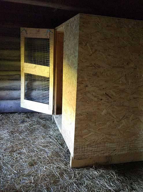 Курятник внутри курятника. А как еще спасти птичек отхорьков, лис исобак?