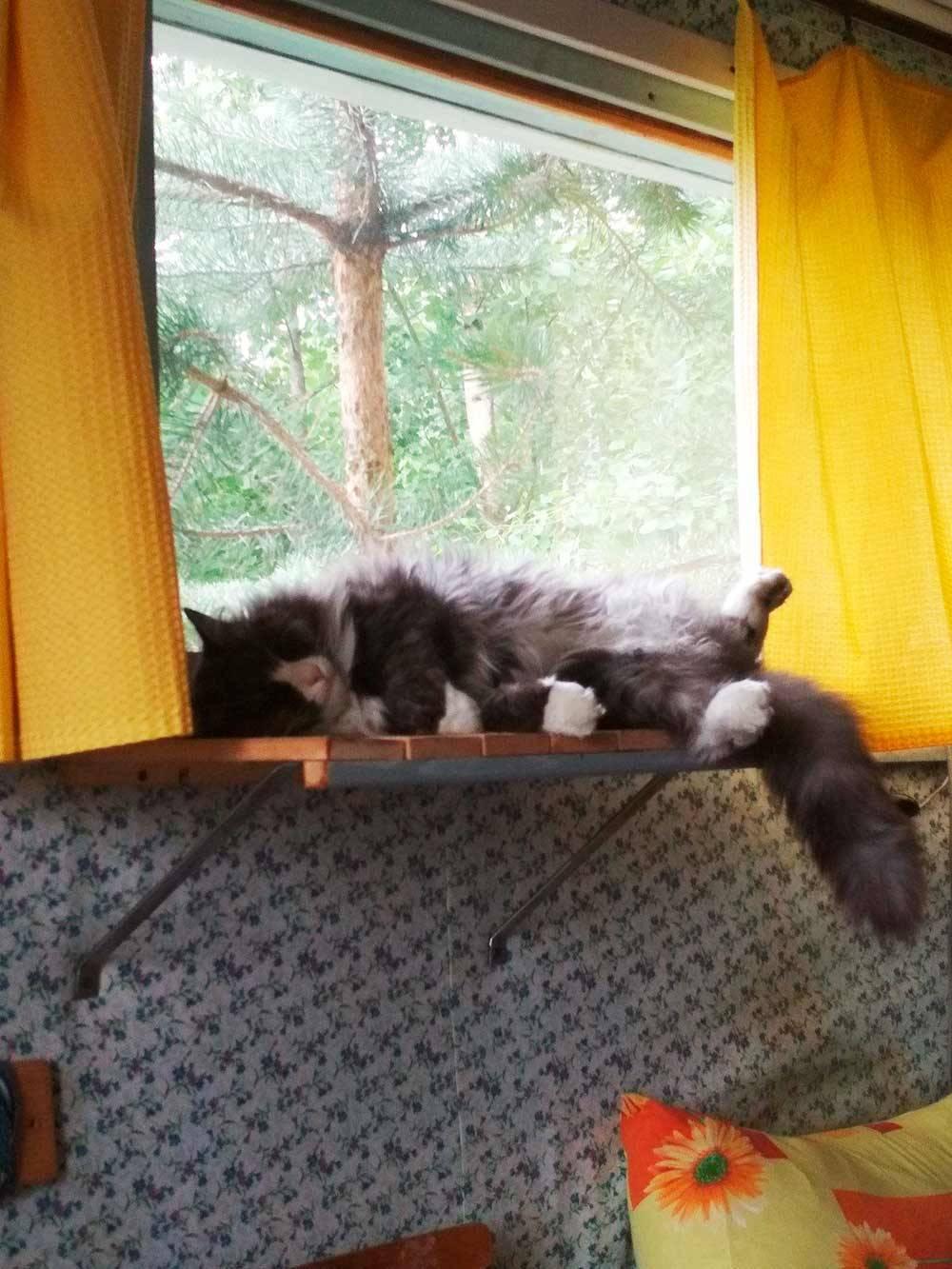 Сева спит после ночной прогулки