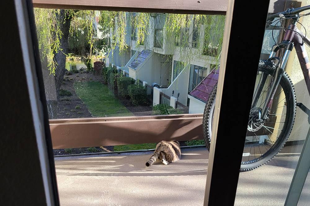 Между делом обнаруживаю, что Зевс торчит из-под перил балкона: он высунулся наружу, чтобы наблюдать за утками. Так, это что-то новенькое. Похоже, нельзя его наружу выпускать, а то все-таки сиганет куда-нибудь