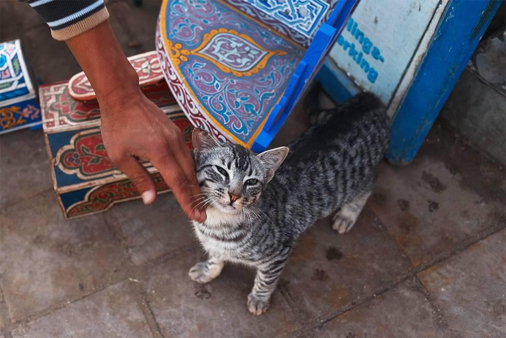Марокко — страна кошек и котов. Они здесь на каждом шагу