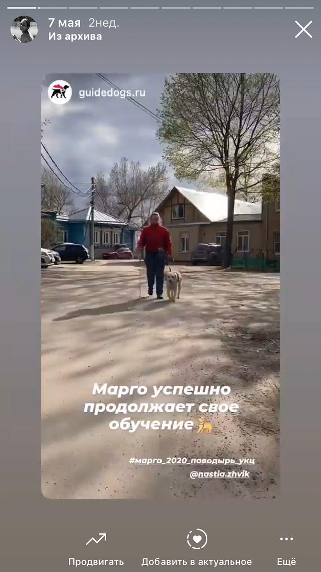 Так Марго обучают ходить по маршруту