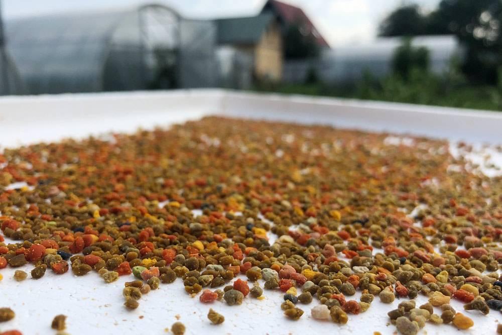 Пыльцу после сбора необходимо просушить: в ней много влаги и она может быстро испортиться. Вот так красиво она выглядит после сушки. Цвета шариков пыльцы разнообразные: от фиолетовых до черных — в зависимости от растений, на которые садились пчелы