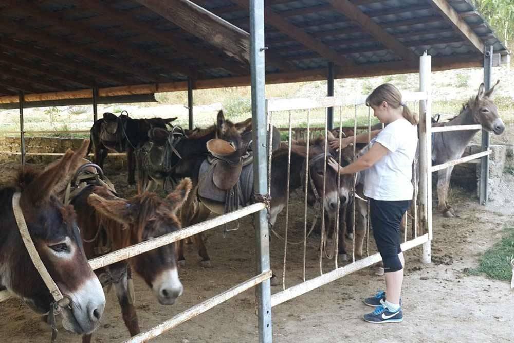На ферме «Чудо-ослик» в Залесном