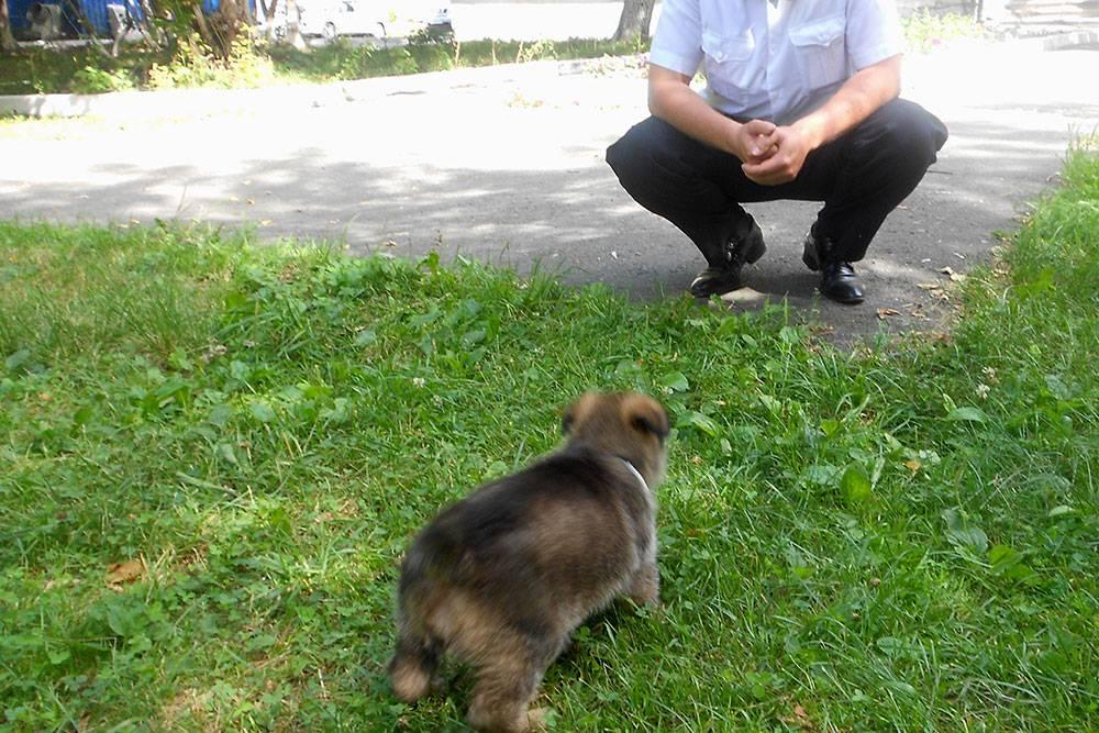 Первое знакомство с руководством — Лайме 2,5 месяца. Хорошо, когда собака сразу привыкает к людям в форме и запаху оружия