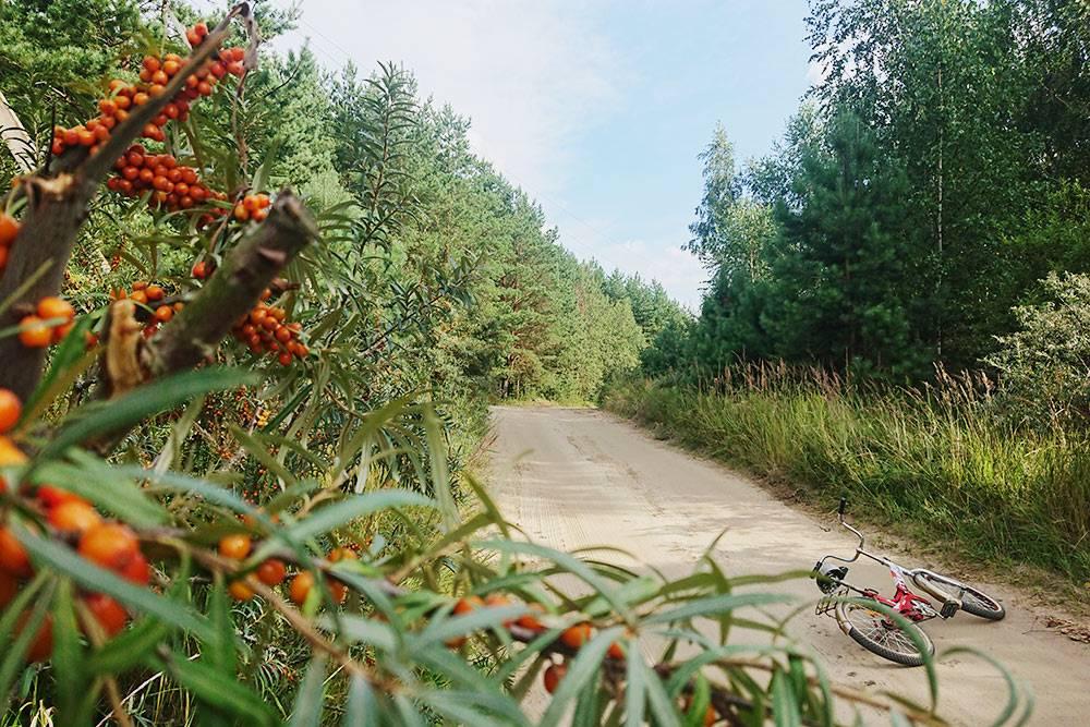 По дороге — типичные дачные пейзажи