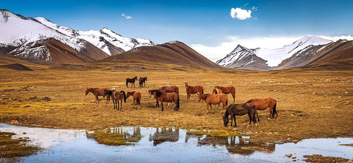 Правила въезда в Киргизию дляроссиян в 2021году