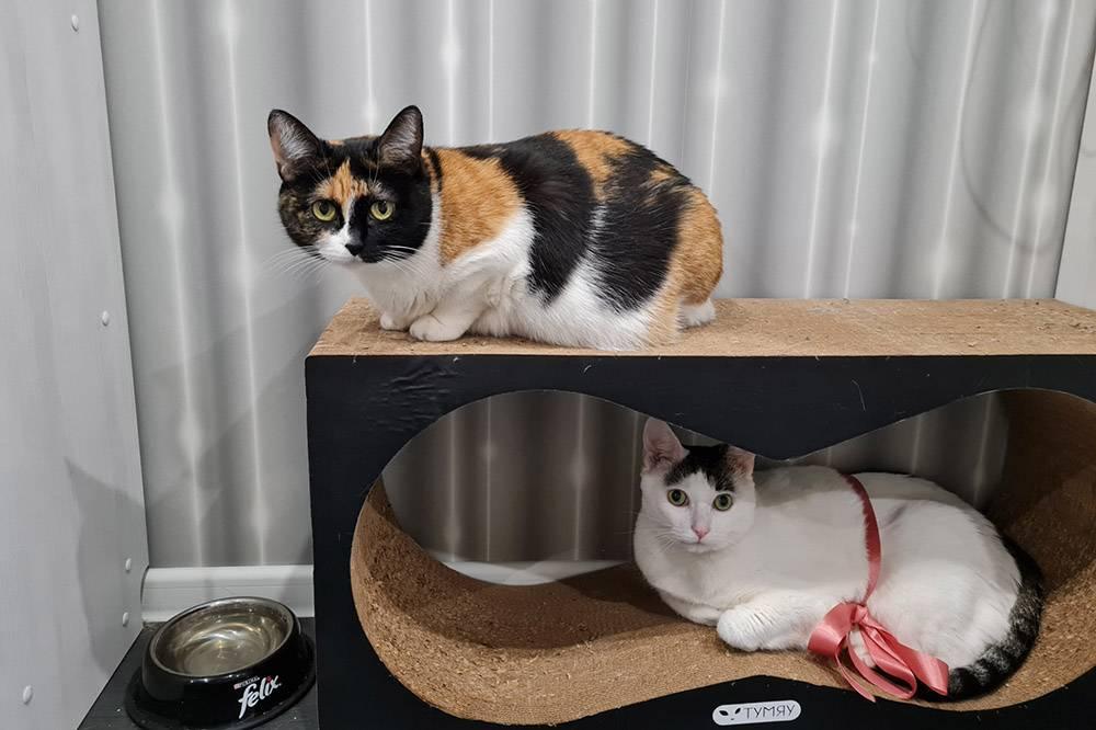 Коты и когтеточка, которую мы купили