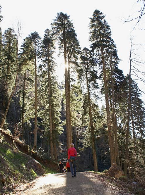 Водопады в парке «Менделиха» небольшие, но прогулка живописная