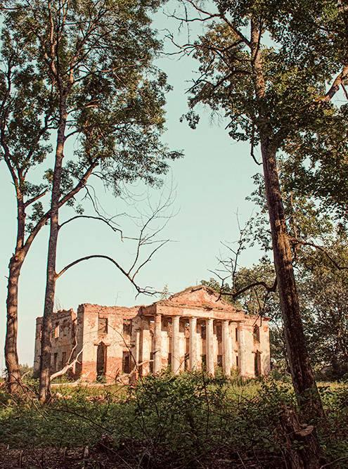 Усадьбу окружает высокий густой лес из лиственных деревьев