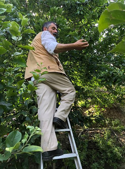 Джордж объясняет, как правильно собирать ягоды