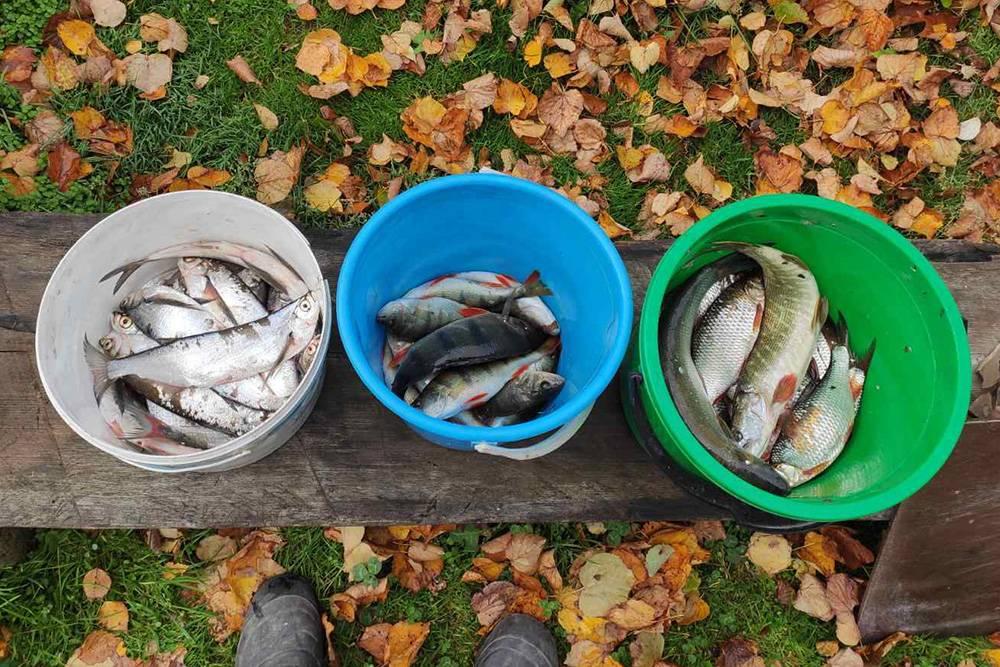 Пойманная в выходные рыба