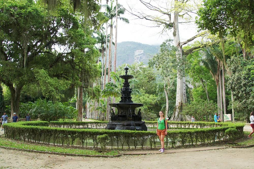 Аллея пальм в ботаническом саду в Рио
