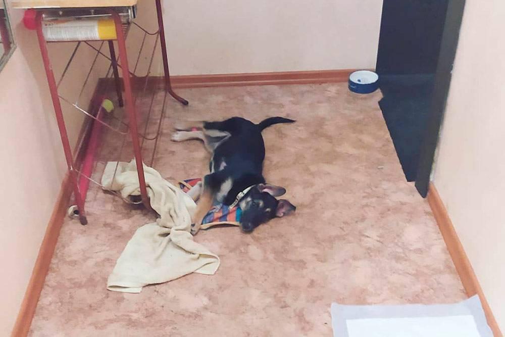 Вот так я оборудовала место длященка: убрала из коридора все вещи, поставила миски, подстилку и положила две пеленки