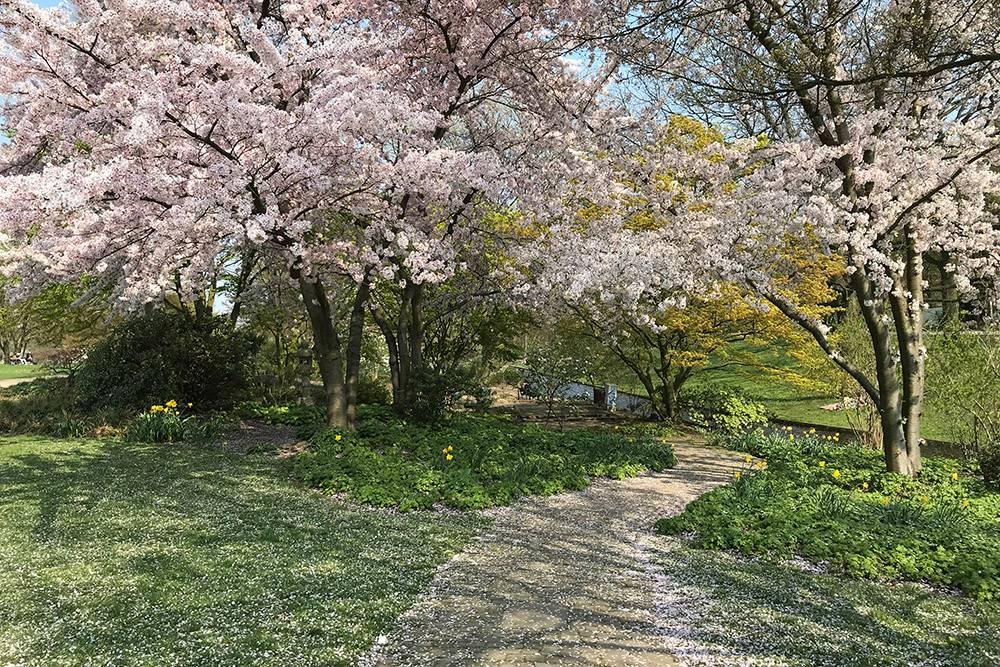Это парк рядом с нашим домом. Весной тут очень красиво